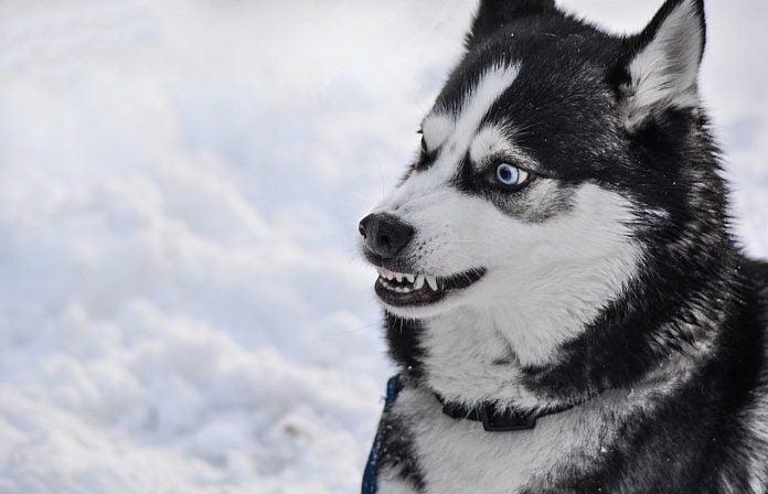 dog 2414477 1280