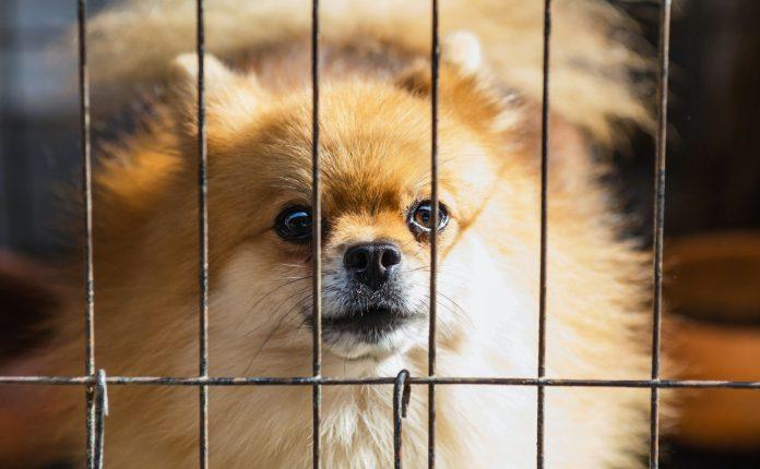 habituer chien à la cage