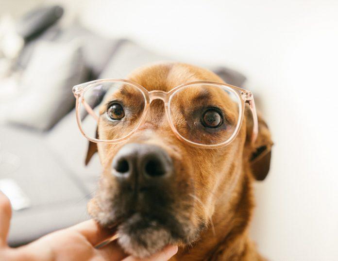 l'éducation comportementale du chien