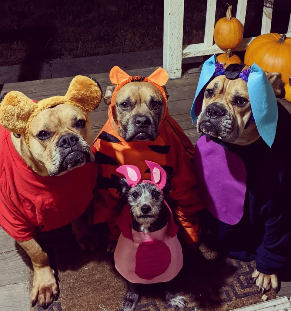 Rescue dogs halloween 1