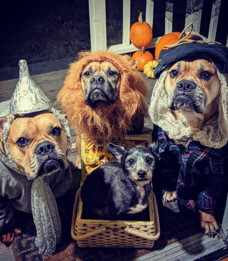 Rescue dogs halloween 2