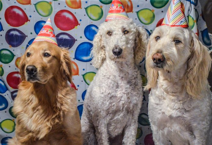 anniversaire pour chien