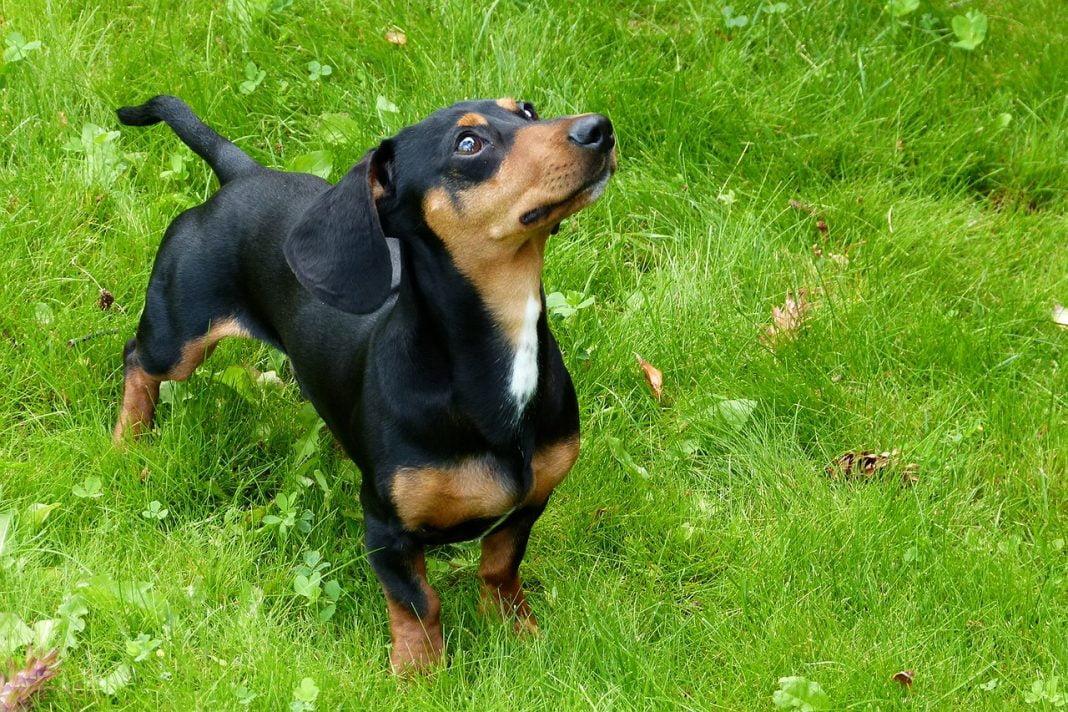 foxhound 53951 1280