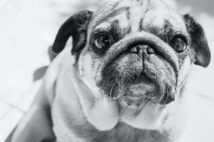 Est-ce que les chiens voient en couleur ?
