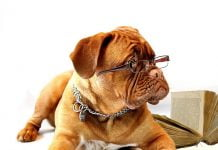 Top 10 des chiens les plus intelligents