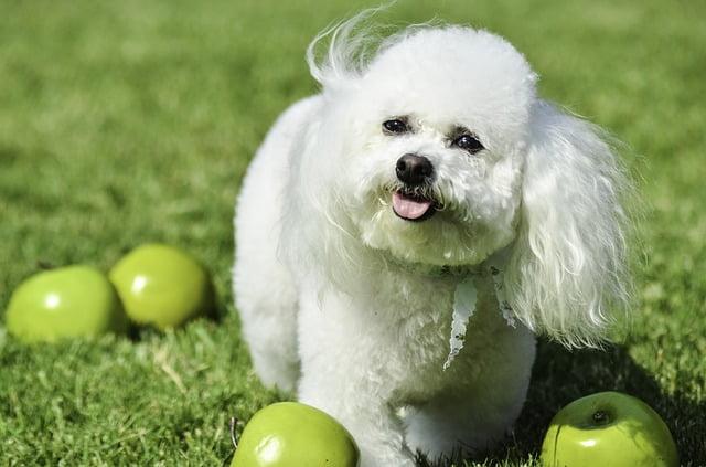 small dog 3512586 640