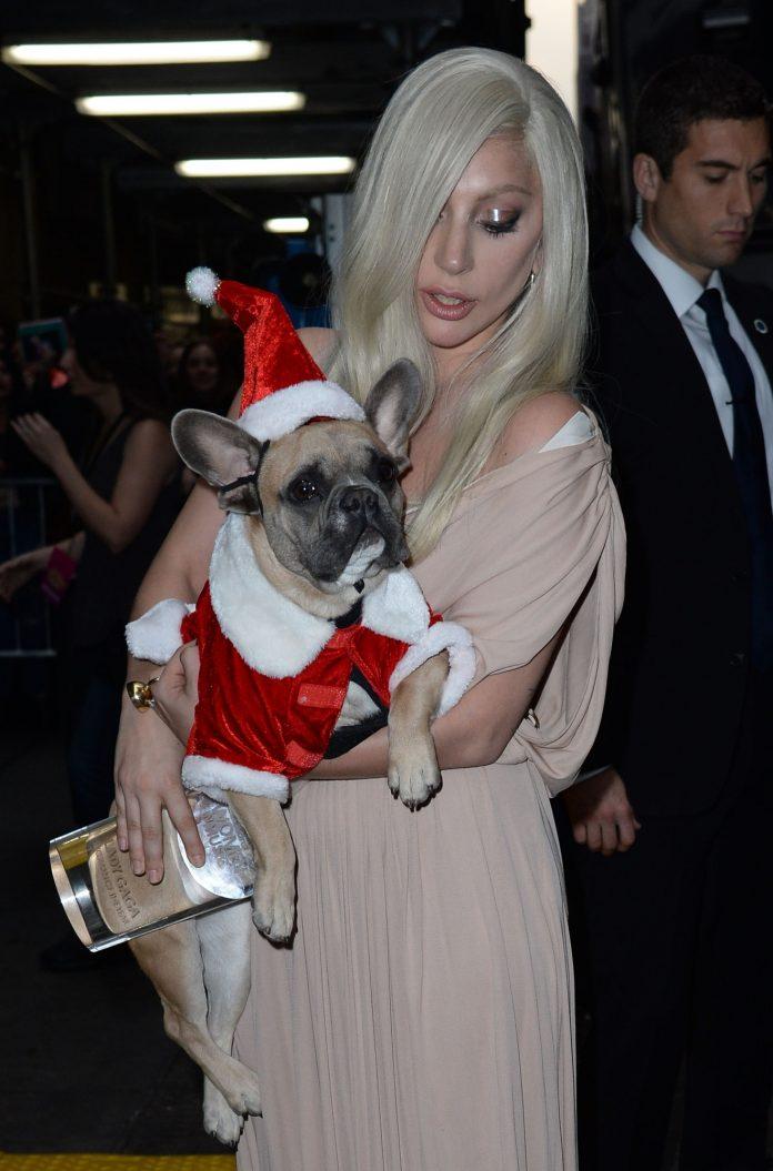 Le mercredi dernier a été marqué par un nouveau vol à mains armées ayant pour cible des chiens, de race Bouledogues français, de la superstar du pop Lady Gaga.