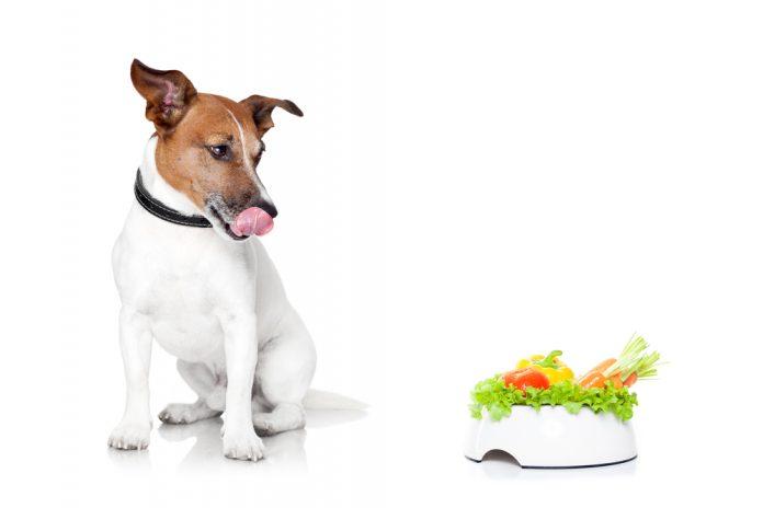 donner fruits et légumes à un chien, il adore !