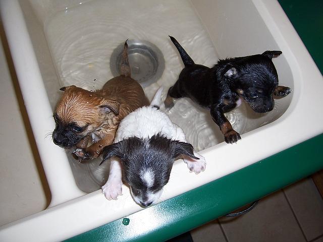 bath time 1111748 640