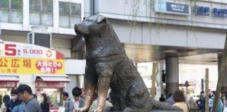 """statue chien japonais """"Hachiko"""""""
